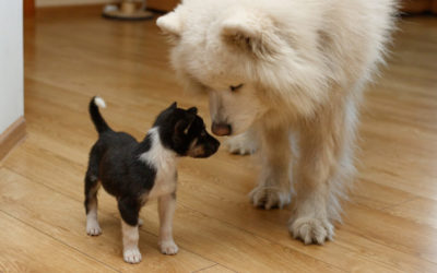 Introducing a new pet to the home, here's how to introduce your dog or cat