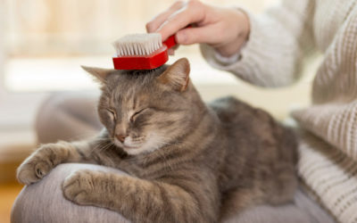 Grooming a pet: here's how to clean the eyes, ears and nose of your dog or cat