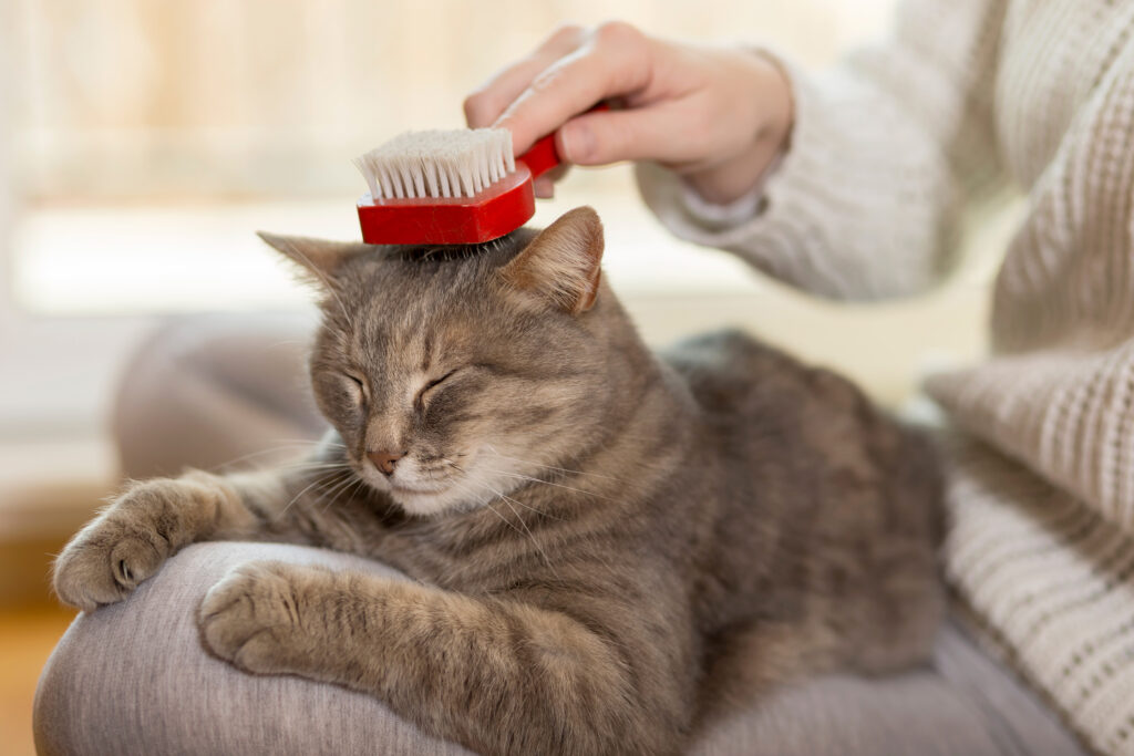 Header cat being brushed x